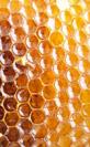 Documentaire sur apiculteur réalisé par Samuel Petit